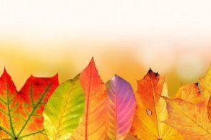 progetti social reading autunno 330x220